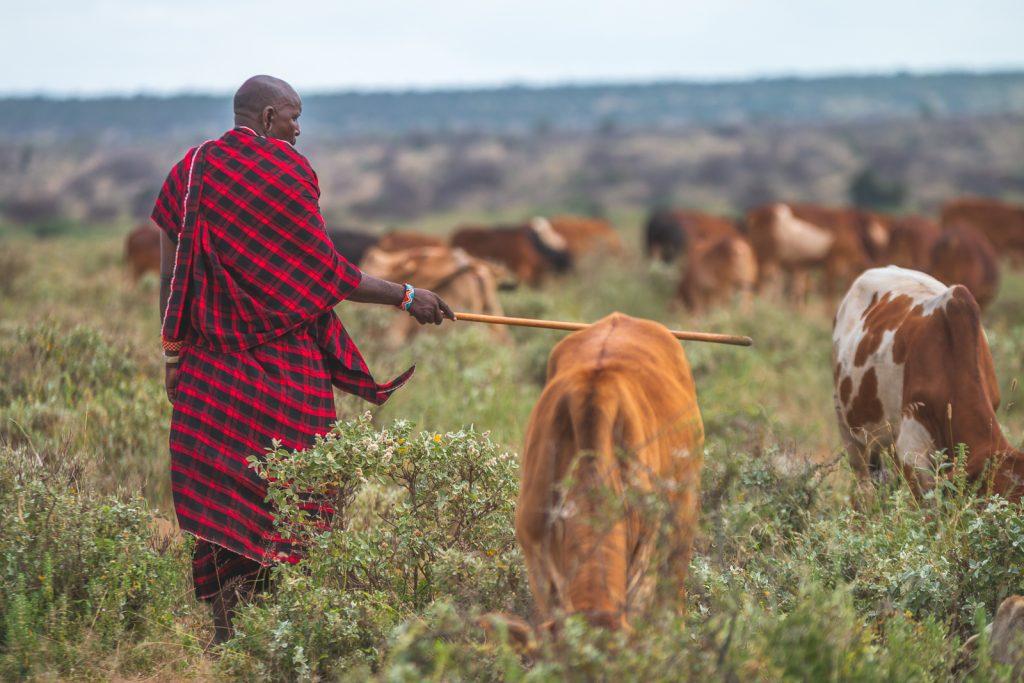 Amboseli Ecosystem Trust