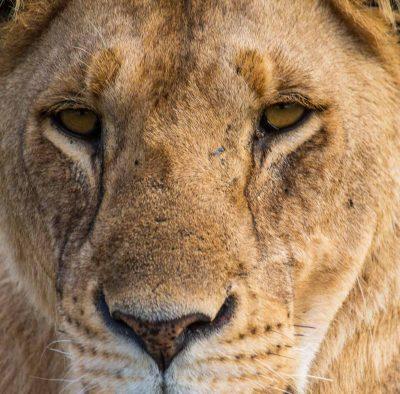Amboseli Ecosystem Trust 2020